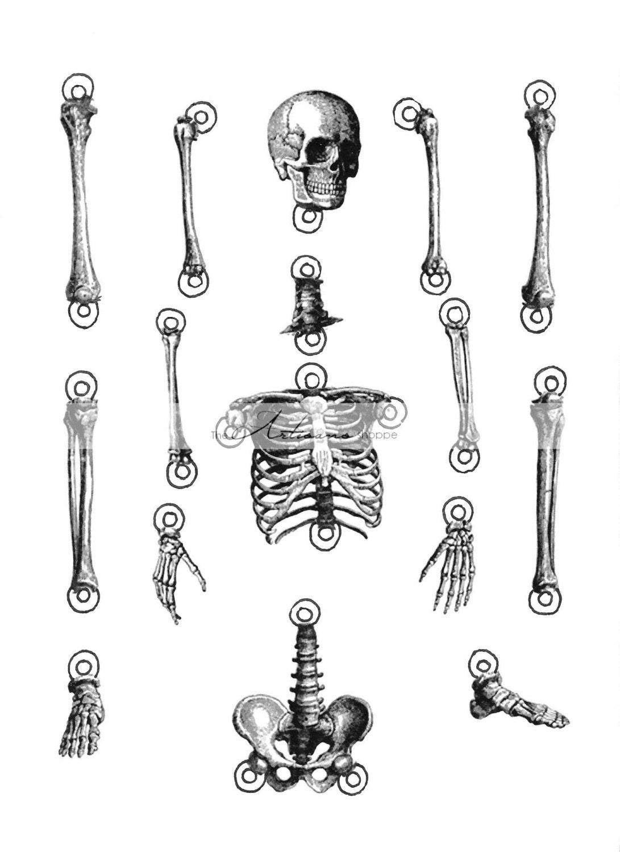 Digital Download Printable Skeleton Cut Out Illustration