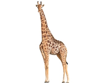 Safari Giraffe Print