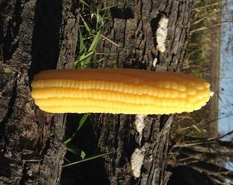 Corn Cob Candle ~ 100% Pure Beeswax