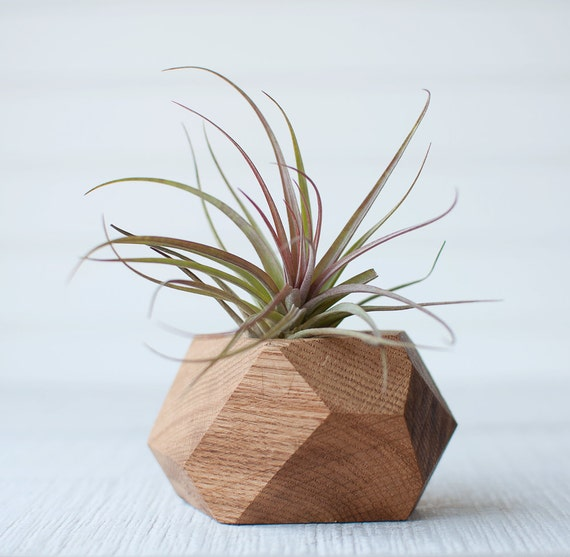 Air plant holder planter geometric planter timber gems for Geometric air plant holder