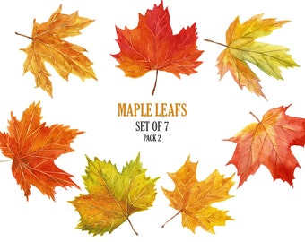 Maple leaf clip art Stock image Autumn leaf digital image Floral Watercolor collage sheet