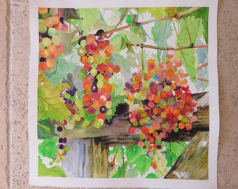 Watercolor Original Square Grapes on the Vine Vineyard Colorful