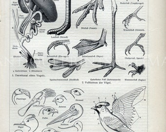 Instant Download Natural History Bird Anatomy Feet Heads Bill Types 400 Dpi Antique Print Repro For