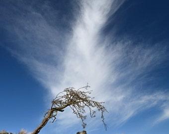 Portrait Lone Tree And Cloud Photography Print, Tree Art, Tree Photography, Blue Sky Art, Sky Photography Portrait Print (UNFRAMED)