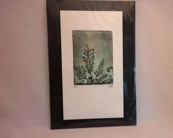 Unique Ferns Handmade Intaglio Print, Naturalism Biological Illustration, Leaves
