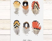 Feather Patterns Vol.3 - large wall hanging, wood trim and printed on textured cotton canvas. Vintage Science Posters
