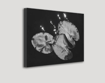 Big Black and White Lily Pads on Sparkling Water Wrapped Canvas Photo Print