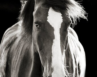 Black and White Horse Photography, Fine Art Horse Photograph, Horse Portrait, Black Background, Horse Picture, Horse Poster, Dark horse