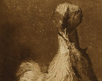 Mrs Silkie - an etching of a Silkie hen