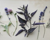 Modern Botanical Collection
