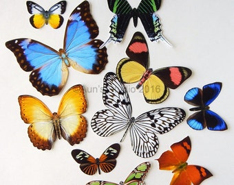 Realistic Paper Butterflies - Cut outs - Set of 10 paper butterfly cut outs - set 3