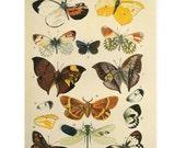 Vintage Print Butterflies & Moths SALE~~Buy 3, get 1 Free