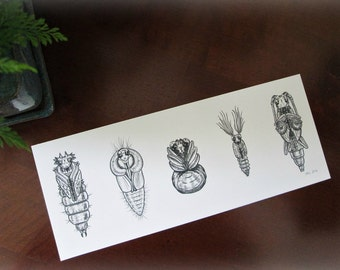 Insect Pupae - Eclosion is Imminent! - Archival Insect Art Print
