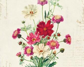 Vintage Botanical Floral on French Ephemera Print, Vintage Floral Print 8x10 P315