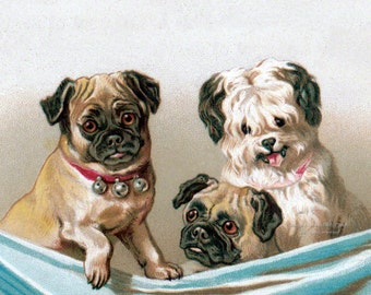 Pugs and Terrier Dogs Greeting Card | Get Well | Thank You | Birthday Card