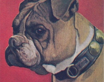 Bulldog Painting- 1900s Antique Postcard- Artist Signed- J G Low- Edwardian Art- Leather Dog Collar- Bull Dog Art- Paper Ephemera