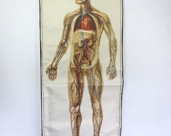 XL Vintage Pull Down Chart, Anatomy Human Body, Biology Print