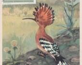 "L. Aristov ""Hoopoe"" Print, Postcard w/Polish stamp -- 1968. Condition 8/10"