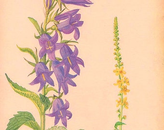 Vintage Edwardian Flowers Herbs 100 Botanical Print plant print botanical print bookplate art print 1970 plants wall art