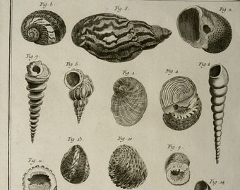 1763 Antique large print of SEA SHELLS. Cones. Molluscs. Sea Life. Marine Animals. Diderot Encyclopédie Engraving. 242 years old.