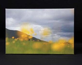 Yellow Dandelions Photographic Canvas