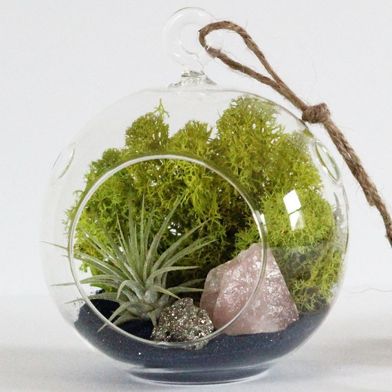 Rose Quartz + Pyrite Air Plant Terrarium Kit with Navy Sand