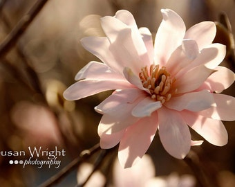 Flower Photography, Wall Art, Nature Print, Home Decor, Pink, Art Photography, Print, Wall Picture, Nature Photography