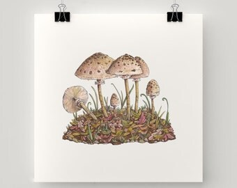"Print Lepiota Mushrooms illustration - 21cm. - 8 "" eco paper - Fantasy world of Charlotte Lyng"