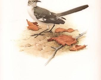 JF Lansdowne Print Book Plate Art, Mockingbird