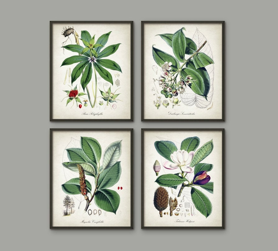 Green Plant Wall Decor Set Of 4 2 Vintage Botanical Posters