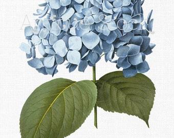 Blue Flower Clipart 'Big Leaf Hydrangea' Image Hortensia Digital Download Botanical Illustration  for Invitations, Collages Decoupage...