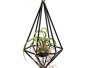 Geo Pendant with Living Air Plant - 4.5 x 4.5 x 9.5in