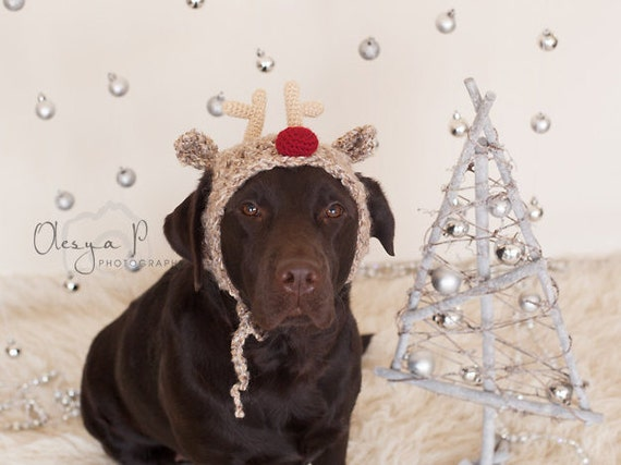 Free Crochet Dog Reindeer Hat Pattern : Download crochet pattern #039 - Large dog Reindeer hat ...