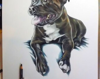 "Shop ""staffordshire bull terrier"" in Pet Portraits"