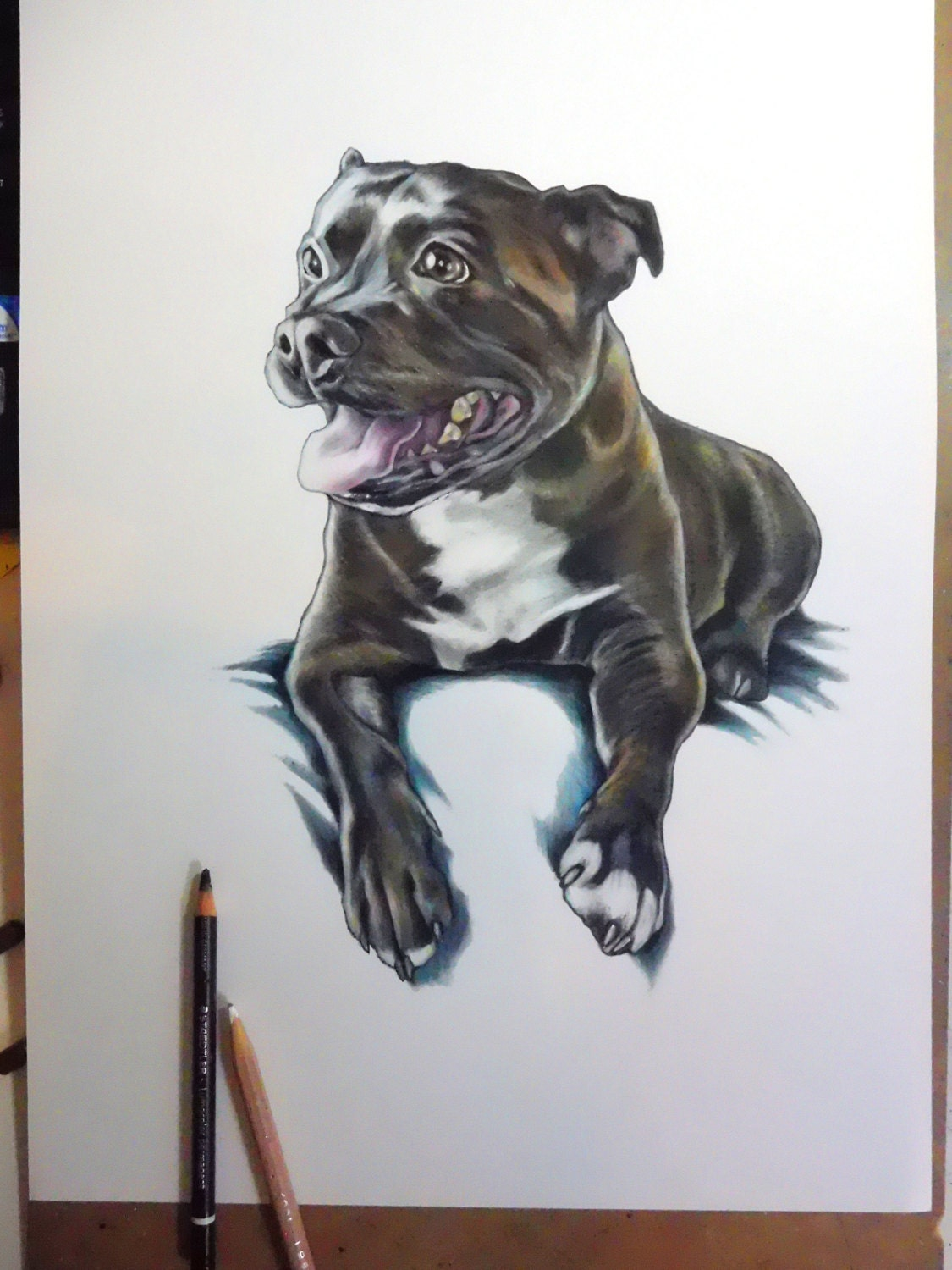 staffordshire bull terrier drawing pet portraits custom. Black Bedroom Furniture Sets. Home Design Ideas