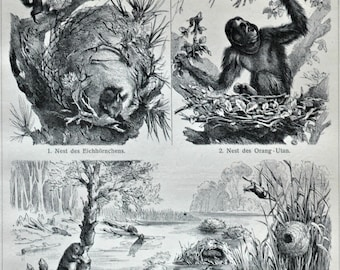 Nests and burrows print. Old book plate, 1904. Antique  illustration. 110 years lithograph. 9'6 x 6'2 inches.