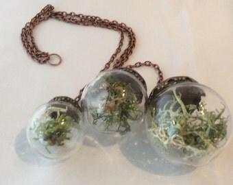 Lichen and moss mobile terrarruim - hand made
