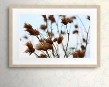 Printable photo art Instant photography Fine art download Wall art decor Home decor Home wall art Nature Photography Dry Thistle Warm tones