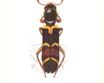 VINTAGE INSECT PRINT, 1960's Vintage Print, Insect Lithograph, Beetle Lithograph, Bug Plate, Bug Print, Beetle Illustration, Beetle Print