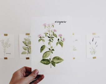 Oregano Watercolor