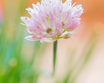 Pink Blossom Macro Photography