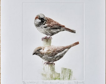 House sparrow (Passer domesticus) - handmade copper-plate engraving print