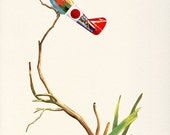 Aerofauna Japanese - Print - Red, yellow and Blue Bird on Branch with Green Leaves - Oriental Minimall, Decorative and Contemporary Style