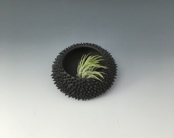 Pod: Black/ black spines