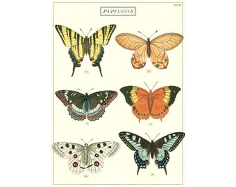 Butterflies, Exotic Butterflies, Butterfly, History of Nature, Papillons, Insects Poster, Butterflies Chart, Wall Hanging, Wall Decor,
