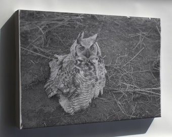 Canvas 24x36; Great Horned Owl Sitting On Ground Nara 283826