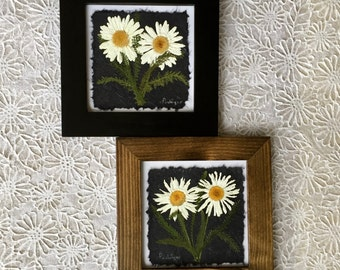 Pressed White Shasta Daisy Picture. 8x8. Available in Black or Walnut Frame. Perfect gift for any daisy lover!! Innocence.