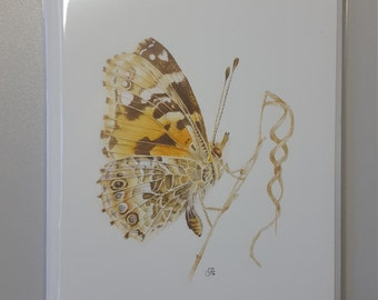 Painted lady butterfly greeting cards x 6