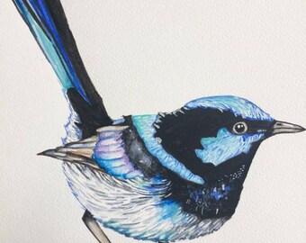 Original Watercolour Blue Wren Wall Art