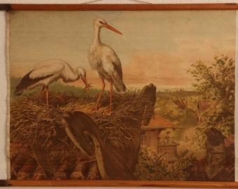 Vintage  Old Print on cardboard  Stork  School Chart Lithograph